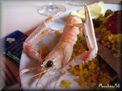 Langoustine.jpg